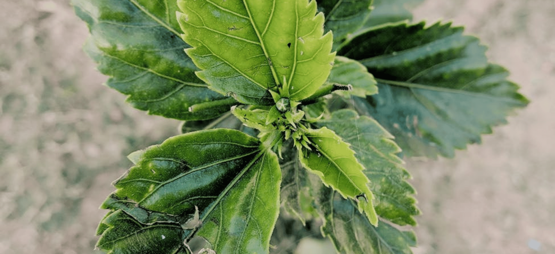 Header image of The Lookout All News Online Events and Virtual Events on Eco-friendly and Sustainable Events